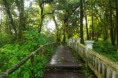 Pathway in the tropical rainforest — Stock Photo