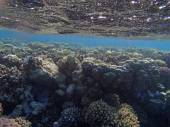 Colorful red sea — Stock Photo