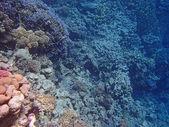 Aventure en mer rouge — Photo
