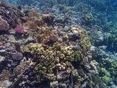 Underwater wildlife — Stock Photo