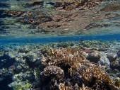 Amazing snorkeling — 图库照片