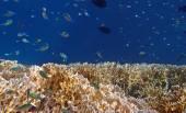 Amazing snorkeling — Stock Photo