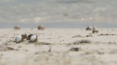 Hermit crabs in the sand — Stock Video