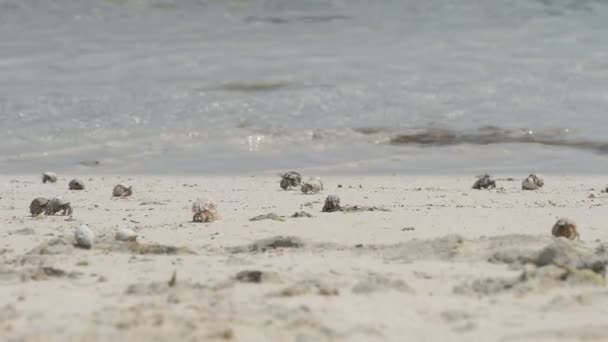 Hermit crabs in the sand — Vidéo
