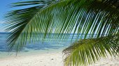 Palm tree in paradise — Stock Photo