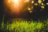 Grass closeup in the evening vintage style — Stock Photo