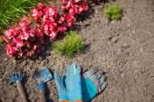 Gloves, rake and scoop. Garden tools — Stock fotografie