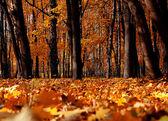 Bright colors autumn trees. Autumn landscape. — Stock Photo