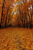 Bright colors autumn trees. Autumn landscape. — Stock Photo