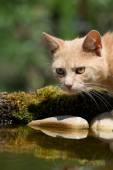 Cat on bird drinkers. — Stock Photo