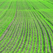 Green spring field background, saturated photo, grass field early spring, green lines background, abstract photo, abstract background, green ground pattern — Stock Photo #57725987