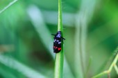insect in nature background — Stock fotografie