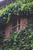 Green Plant growing on the window — Stock Photo