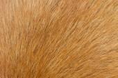 Dog fur — Stock Photo
