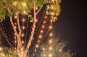 树上的灯泡 — Stockfoto