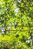 Red beard bird perching on the tree  — ストック写真