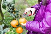 Child on Orange Farm — Stock Photo