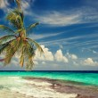 Palm trees over lagoon — Stock Photo #57612021