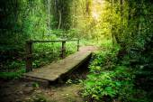 Wooden bridge in tropical rain forest — Foto de Stock
