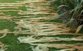 Drying Flax Yarns — Stock Photo