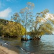 Well Water Trees — Stock Photo #67443109