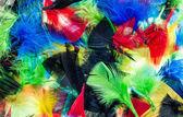 Mixture Color Feathers — Zdjęcie stockowe