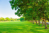 Green field park sunny day  — Stock Photo