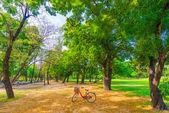 Rode fiets in park — Stockfoto