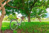 White bicycle in the park — Fotografia Stock