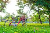 Röd cykel på grönt gräs — Stockfoto