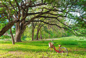 Red bicycle on green grass — Stock Photo