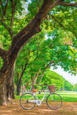 White bicycle in the park — Stockfoto
