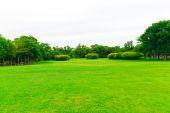 Prato verde con l'albero nel Parco della città, bellissimo parco — Foto Stock