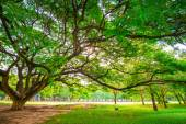 Green public park outdoor with tree and  sky — Stock Photo