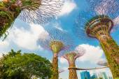 View of The Supertree Grove at Gardens by the Bay — Stock Photo