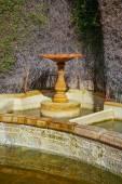 Stone birdbath in garden — 图库照片