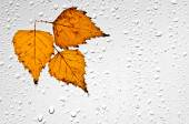 Colorful autumn leaves and raindrops on the window — Stockfoto