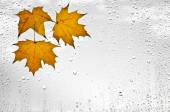 Colorful autumn leaves and raindrops on the window — Stock Photo