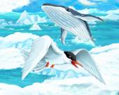 Gull   and whale — Stock Photo
