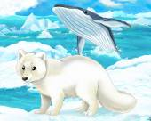 Polar fox  and whale — Stock Photo