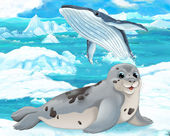 Seal  and whale — Stock Photo