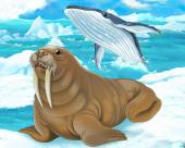 Walrus and whale — Stock Photo