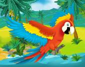 Cartoon parrot — Stock Photo
