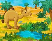 Dromedary  camel camel — Stock Photo