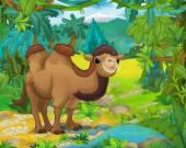 Cartoon animal - camel — Stock Photo