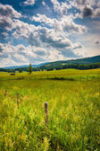 Farm fields in the rural Potomac Highlands of West Virginia.  — Stock Photo