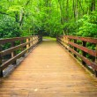 Walking bridge over the Oconaluftee River, at Great Smoky Mounta — Stock Photo #52520101