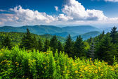 Yellow flowers and view of the Appalachian Mountains from the Bl — Stock Photo