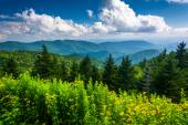Yellow flowers and view of the Appalachian Mountains from the Bl — Foto Stock