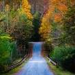 Autumn color along a road in Michaux State Forest, Pennsylvania. — Stock Photo #52575805